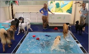 Pools open for 'Dog days of summer'